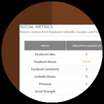 Bulk SEO Metrics Checker: Bulk IP, WhoIs, Social Metrics, PageSpeed